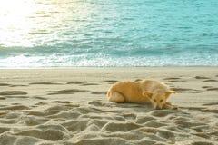 Un chien est sur la plage Photos libres de droits