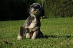 Un chien futé Photo libre de droits
