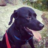 Un chien heureux photos libres de droits
