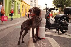 un chien inquiet, son maitre n'est plus la Royalty Free Stock Photos