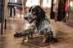 Un chien jouant avec deux chatons mignons Images libres de droits