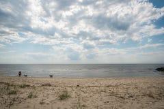Un chien joue sur le rivage de baie de Delaware Photos stock
