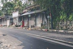 Un chien maigre sur les rues d'Ubud, Bali, Indonésie photographie stock libre de droits