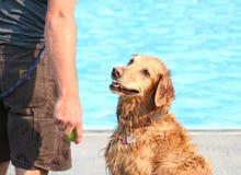 Un chien mignon à une piscine Image libre de droits
