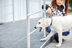Un chien mignon Labrador marchant sur la rue Concept d'animal familier Image libre de droits