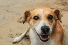 Un chien mignon sur la plage de sable Photos libres de droits