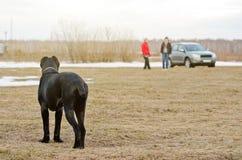 Un chien noir se tient dans le domaine et regarde deux personnes dans le d Images stock