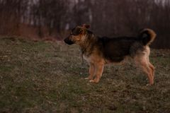 Un chien prêtant l'attention photo libre de droits