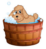 Un chien prenant un bain illustration stock