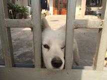 Un chien qui dans la mauvaise humeur photo stock