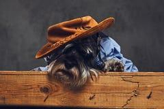 Un chien s'est habillé dans une chemise bleue et un chapeau jaune Photographie stock libre de droits