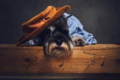 Un chien s'est habillé dans une chemise bleue et un chapeau jaune Image libre de droits