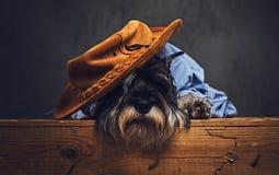 Un chien s'est habillé dans une chemise bleue et un chapeau jaune Photos stock