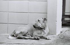 Un chien seul image libre de droits