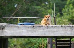 Un chien sur le pont Images stock