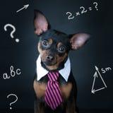 Un chien, toyterrier un lien et un intellectuel Images libres de droits