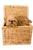 Un chienchien est dans un joncteur réseau. photo libre de droits