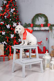 Un chiot de golden retriever près d'arbre de Noël Photographie stock libre de droits