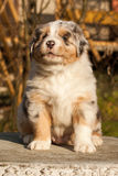 Un chiot gentil photo stock