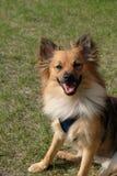 Un chiot heureux Photo stock