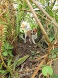 Un chiot joue dans un jardin envahi Photos stock