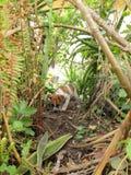 Un chiot joue dans un jardin envahi Image libre de droits