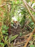 Un chiot joue dans un jardin envahi Photo stock