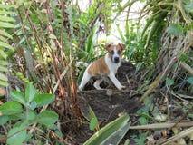 Un chiot joue dans un jardin vert image stock