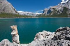 Un chipmunk en el lago Minewanka Foto de archivo libre de regalías