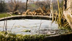 Un chorrito del agua cae en una tina redonda vieja de la piedra cubierta de musgo imagen de archivo libre de regalías