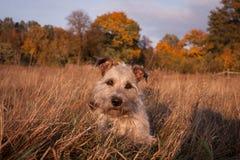 Un chucho lindo en retrato del otoño Imagenes de archivo