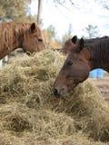 Un cibo dei tre cavalli Fotografia Stock Libera da Diritti