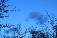 Un cielo blu con la luna e gli alberi neri Immagini Stock