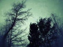 Un cielo espeluznante Imagen de archivo libre de regalías