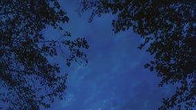 Un cielo nocturno azul en el bosque Imágenes de archivo libres de regalías