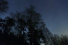 Un cielo nocturno hermoso, la vía láctea y los árboles fotografía de archivo libre de regalías