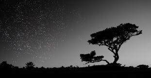 Un cielo in pieno delle stelle Fotografia Stock Libera da Diritti