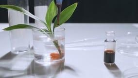 Un científico en un laboratorio analiza el suelo y las plantas dentro para recoger la DNA de la planta Concepto: análisis, DNA almacen de video