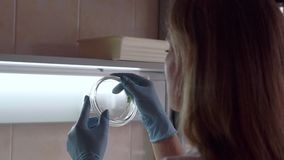 Un científico en un laboratorio analiza las plantas en una placa de Petri Lanzamiento de la cámara lenta almacen de metraje de vídeo