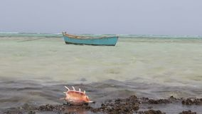 Un cierre del cangrejo del Mar Rojo para arriba de almacen de video