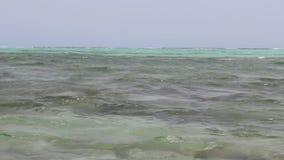Un cierre del cangrejo del Mar Rojo para arriba de metrajes