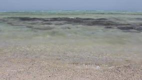 Un cierre del cangrejo del Mar Rojo para arriba de almacen de metraje de vídeo