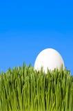 Un cierre detallado para arriba de un huevo blanco, Nestled en la hierba verde w Foto de archivo libre de regalías