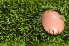 Un cierre detallado para arriba de un huevo de Brown, Nestled en la hierba verde Foto de archivo libre de regalías