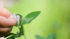 Un cierre encima de la foto de una mano del bebé que toca las flores y las plantas, niñez de exploración natural HD almacen de video