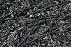 Incinere después del fuego 5 fotos de archivo libres de regalías