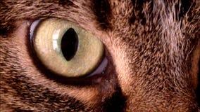 Un cierre para arriba de un ojo de gatos almacen de video