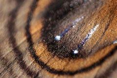 Un cierre para arriba de un ala de una polilla Fotos de archivo libres de regalías