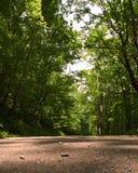 Un cierre para arriba de un camino de tierra en el bosque Imagen de archivo