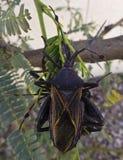 Un cierre para arriba tres del asesino Bugs Imagen de archivo libre de regalías